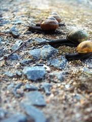 Snail race (FriaLOve) Tags:
