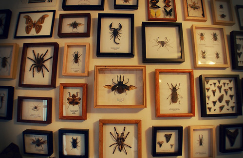 SD_studio_insects