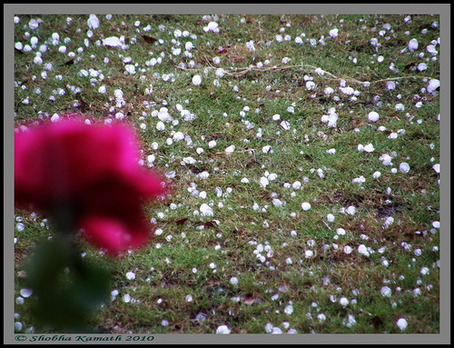 Gir Birding lodge - Hailstorm 2