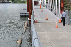High water on the Willamette-21-20