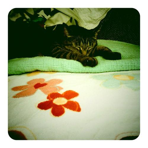 Caturday by hello jenny