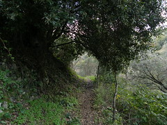 Tunnels & Trees (franz.g) Tags: trees alberi tunnel roads tunnels calabria sentieri pazzano