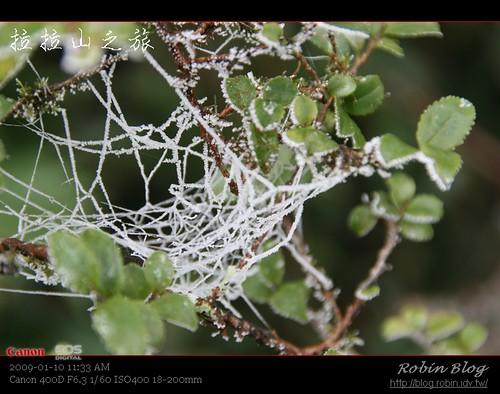 你拍攝的 20090110數位攝影_拉拉山外拍193.jpg。