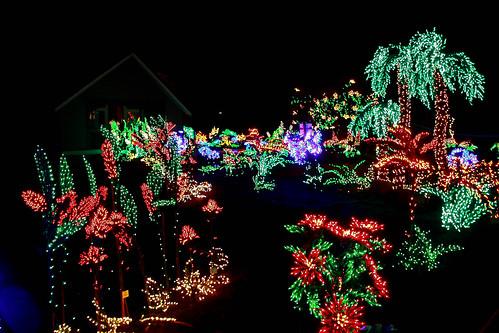 tropical lights