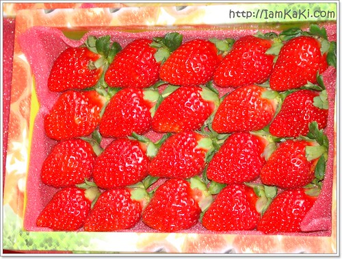 strawberryBOX20