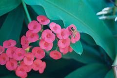 I'm not in love with you, (j o u r n e y) Tags: verde rojo bee pica alas polen miel superfurryanimals abeja insecto volar pelitos colourartaward yuxtaposedwithu imnotinlovewithyou sisterhoney