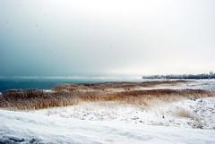 Bear Lake (tamalee) Tags: lake snow fog utah weeds marsh bearlake pfogold pfosilver