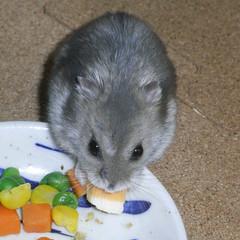ハム用チーズを食べるコー太