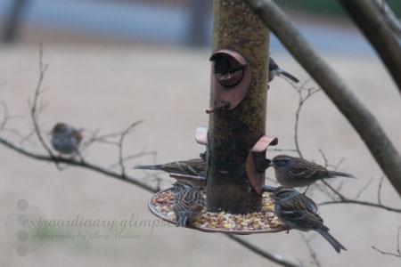 birds_Jan252009_0007web