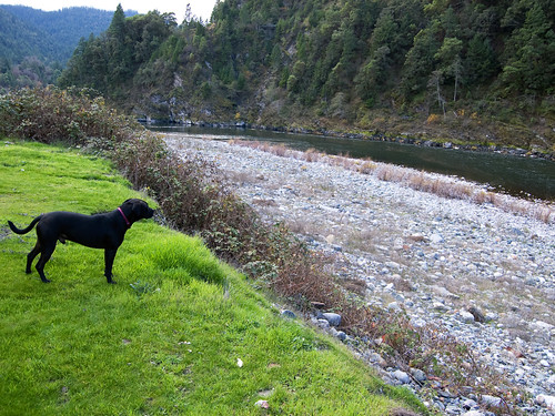 Shadow Contemplating the Klamath