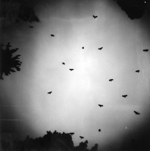 The Ravens of cemetery Sihlfeld.