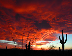 RED WAVES (Krieger Conradt) Tags: sunset red arizona cactus sky southwest nature beautiful cacti landscape flickr desert tucson nikond70 silhouettes best saguaro sonoran breathtaking sonorandesert pictureperfect settingsun saguaros classique naturesfinest southernarizona blueribbonwinner otw arizonasky arizonasunset desertscape abigfave cameradeourobrasil ultimateshot frhwofavs colourartaward platinumheartaward thesuperbmasterpiece breathtakinggoldaward flickraward nikonflickraward vosplusbellesphotos goldenart 5abovestream heavenlycaptures skycloudsun dragonsdanger worldclassnaturephoto expressyourselfaward platinumbestshot platinumpeaceaward spiritualtothesenses vividstriking nikonflickrawardplatinum