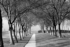 Pathway (JasperYue) Tags: road morning light shadow bw white mist black tree nature monochrome fog landscape pattern path perspective foggy shade parallel discovery emptiness fremontca