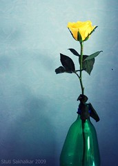 Rose in a bottle (Stuti ~) Tags: life blue light india green leaves rose yellow wall petals bottle still bloom mumbai crooked bigmomma challengeyouwinner mywinners colorphotoaward friendlychallenges thechallengefactory storybookwinner