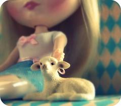 Teeny lamb