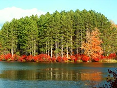 Forest in Reflection (Stanley Zimny (Thank You for 16 Million views)) Tags: park autumn trees red lake ny reflection fall water yellow forest gold woods seasons harriman 100commentgroup
