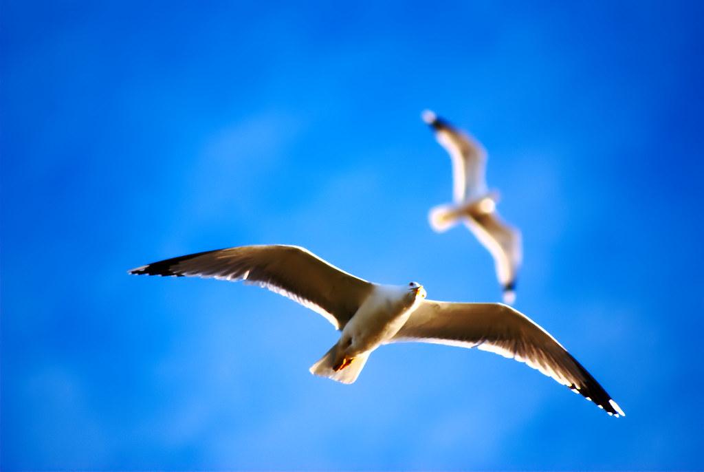 Free bird - Directa de NEF