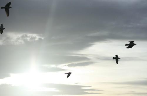 anniversary birds