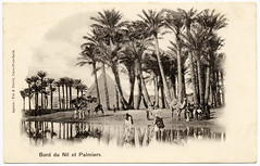 Dreamy Orient: Palm Trees at the Banks of the Nile (c.1902) (postaletrice) Tags: africa old trees people reflection art del vintage landscape geotagged photo al gente antique postcard egypt paisaje palmeras palm nile antigua reflet cairo reflejo belle romantic pyramids greater postal egipto oriental nouveau orient nil riverbank paysage camels giza banks bord postale palmiers gens carte pirmides gizeh ancienne afrique pyramides rive tarjeta orillas nilo gypte frica cpa romantique camellos epoque gizah chameaux romntico jizah deltiology cartofilia cartophilie geo:lon=300182 geo:lat=312176