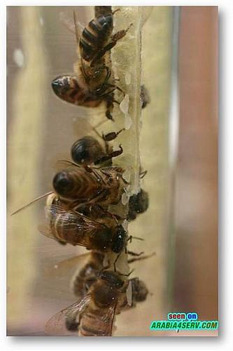 صور كيفية التخلص من الكرش صور النحل صور النحل والعسل