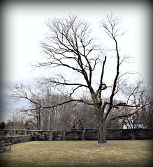 Late winter tree (Donna Will) Tags: tree canon virginia upperville trinityepiscopalchurch fauquiercounty canong10