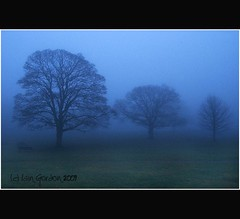 Diminishing Returns - Three Trees - Misty Evening View - Camperdown - Dundee (Magdalen Green Photography) Tags: trees mist scotland cool dundee scottish eerie tayside threetrees haar camperdownpark diminishingreturns creepyforest dsc4372 iaingordon mistyeveningview
