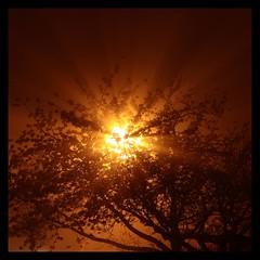 Alberi in fiore tra la nebbia (Claudio) Tags: fog alberi mygarden nebbia raggidiluce alberiinfioretralanebbia