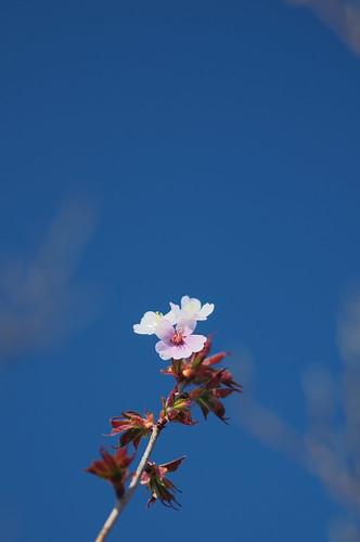 200904110214桜