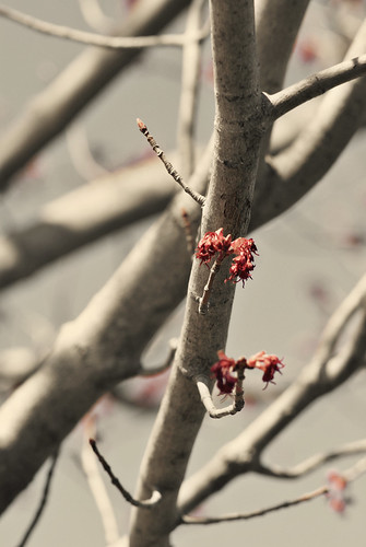 Budding Branches 1.