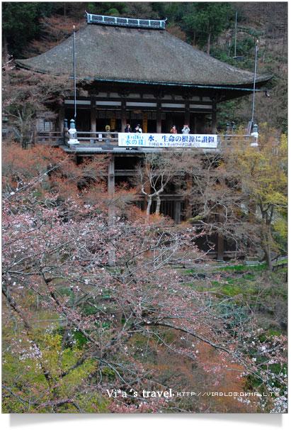 【京都春櫻旅】京都旅遊景點必訪~京都清水寺之美京都清水寺35