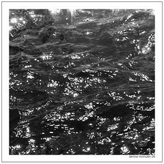 0003.jpg OM-1 (jspmcmn) Tags: trees bw reflection scannednegatives