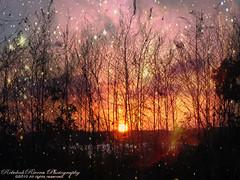 avalon (Rebekah Rivera Photography) Tags: trees sunset sky cloud sun saint clouds avalon lakefront anthonygreen