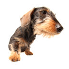 the DachshundS On The Move <br>group icon
