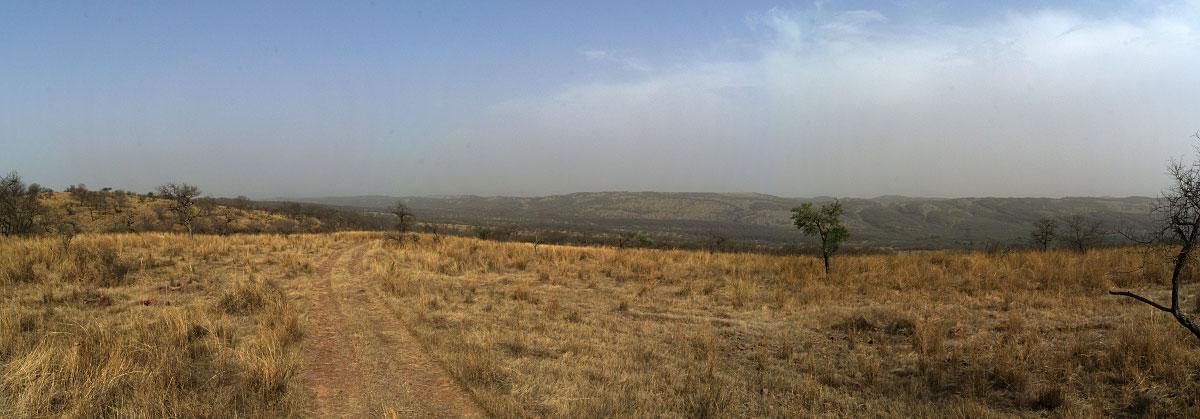 Open grassland, Ranthambhore National Park