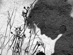 Shadow on the wall (irene gr) Tags: portrait bw selfportrait monochrome wall shadows olympus zuiko e30 43 blackdiamond sihlouette zd fourthirds 1454mm f2835 zuikodigital 1454mmii irenegr artisawoman
