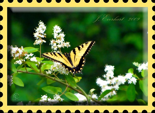 Butterflies Are Free To Fly by J. Everhart