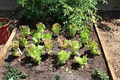gardening 016.JPG