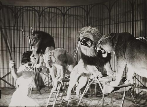 Lady lion tamer