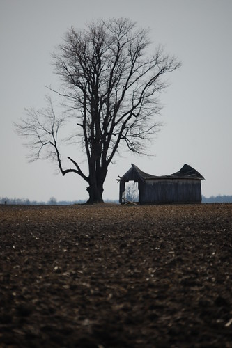Deteriorating Barn and Tree