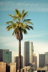 DSC_5879m (UbiMaXx) Tags: california usa tree skyline la los interesting nikon downtown angeles palm explore maxx explored d700 ubimaxx