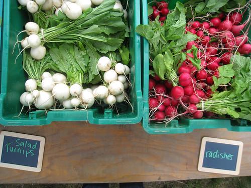 Week 1 Turnips or Radishes?