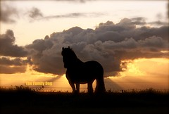 cheval (The Family Dog) Tags: sunset sky horses horse silhouette clouds caballo cheval fries ameland paard friese