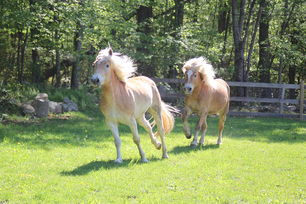 horses 188x