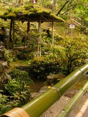 At Kinkaku-ji