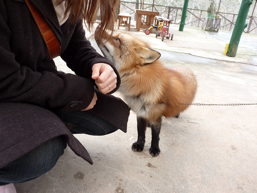 fox17