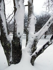 SnowTree_2311