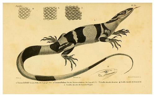003-Erpétologie générale ou Histoire naturelle complète des reptiles 1834