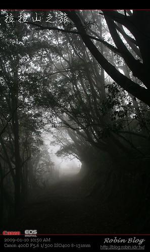 你拍攝的 20090110數位攝影_拉拉山外拍099.jpg。