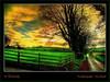 In the country (Irishphotographer) Tags: autumn trees ireland sky irish tree art beauty oneaday sunshine stone naked landscape earth colorfull explore day16 sureal day17 day18 skys hdr touring eyecatcher irishart kinkade codown inthecountry beautifulireland exploretop20 loughbrickland nakedbeauty thebestofday pentaxk20d skyascanvas flickrlovers kimshatwell ©irishphotographer irishcountryscene breathtakingphotosofnature beautifulirelandcalander wwwdoublevisionimageswebscom