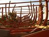 ακόμα να πήξει και να φανουν οι γραμμές οι ναυπηγικές (AEGEOTISSA) Tags: boat woodenboat galleon shipbuilding yacth βάρκα καράβι καρνάγιο σκάφοσ λευκάδα ταρσανάσ πειρατικό ξύλινο ναυπήγιση σκαρί καραβομαραγκόσ corsarodelsantamaura γαλίονι httpaegeotissablogspotcom